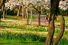 La Rochelle printanière : parc Charruyer Sud