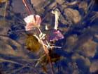 La ronce dans l'eau