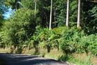 la route transversale de la Dominique