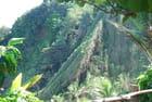 la végétation envahissante de la Dominique