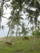 La vie d'un cheval au ghana