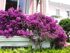 La villa  Ephrussi de Rothschild (33)