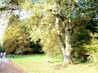 Le banc...et l'arbre