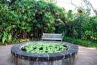 le bassin de plantes aquatiques