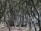 Le bois sauvage