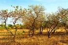 Le bush sénégalais