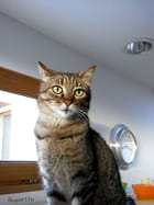 Le cat :Corse