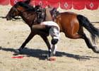Le cavalier acrobate