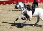 Le cavalier acrobate...