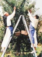 La ceuillette des fruits le père trappiste et le novice