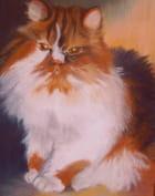 Le chat de christine