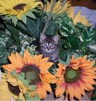 Le chat de dylan