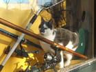 Le chat du pêcheur
