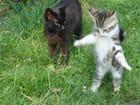 Le chaton qui danse