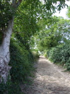 Le chemin de Bournai
