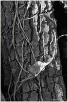 le chêne -liege