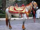 Le cheval de sidi hrazem