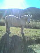 Le cheval et le ciel