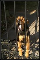 Le chien de garde...