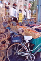 Le chien garde le vélo