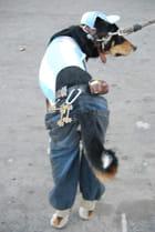 Le chien mannequin