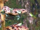 Le colibri en action  (concours)