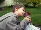 Le coq et l'enfant