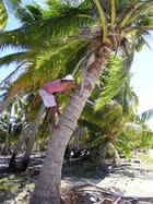 Le cueilleur de noix de coco
