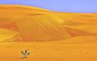 Le désert ocre de Lompoul