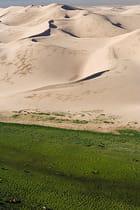 Le gazon au pied des dunes
