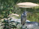 Le Heron et le parasol