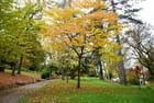 Le jardin botanique dans sa splendeur automnale - 1