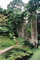 Le jardin de balata