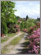 Le jardin de Colette