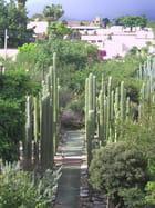 Le jardin de plantes grasses