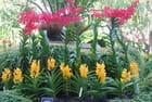 le jardin des orchidées