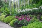 le jardin des orchidées de Singapour
