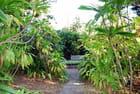 le jardin du Conservatoire National Botanique de Mascarin