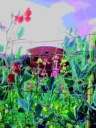 Le jardin en été