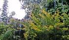 Le jardin sous la pluie 3