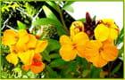 Le jaune à l'honneur pour ce printemps - 6