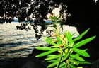 Le lac et sa plante verte!!!