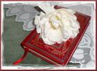 Le livre et la tulipe