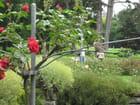 Le moineau et la rose