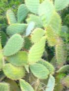 Le monde entier est un cactus !!!
