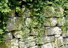 Le mur en pierre
