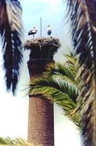 Le nid à cigognes