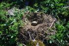 le nid de mouettes