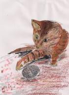 Le nouveau chaton de mamie laurency