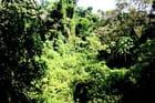 Le paradis vert